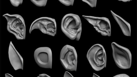 ears 3D model with high poly and low poly