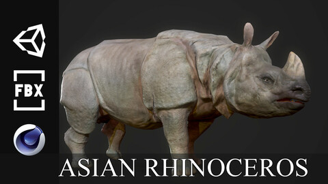 Asian Rhinoceros - Game Ready