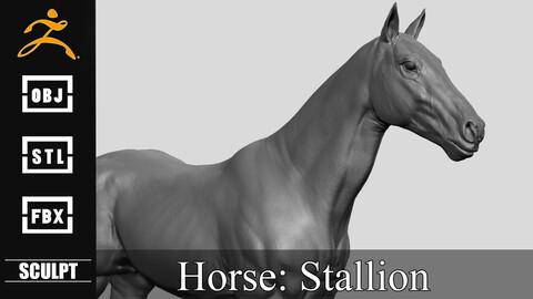 Realistic Horse Sculpt