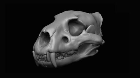 Lion Skull 3D