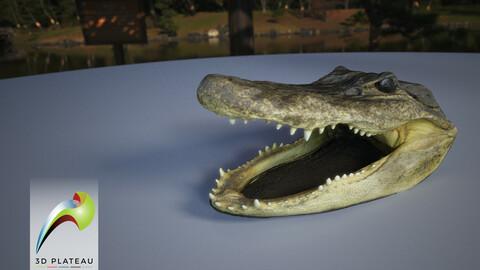 0001-07_Alligator