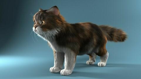 3D Picture Cat