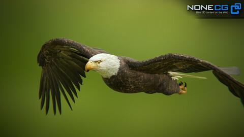 Bald Eagle v3 Unity
