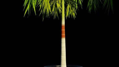 Potted Palm tree Animated and Rigged Low-poly 3D model