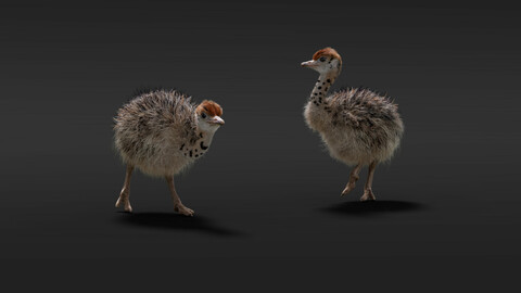 Ostriches_Young