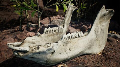 Dry Animal Bones - Photoscan Vol 2.