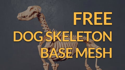 Free Base mesh - Dog skeleton