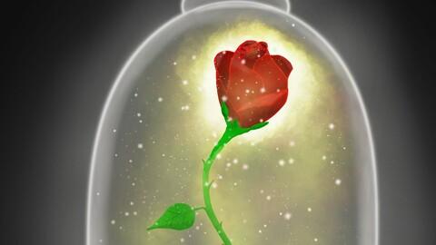 Enchanted rose digital painting