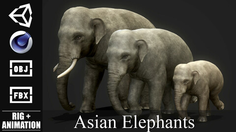 PBR Asian Elephants - Game Ready