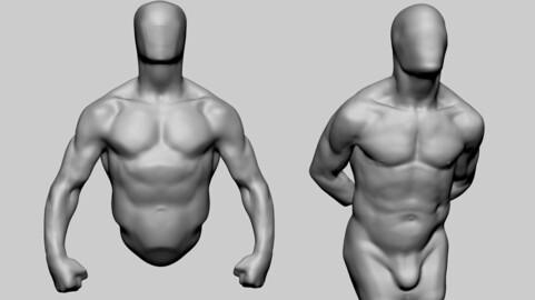 Male Torso Studies 03