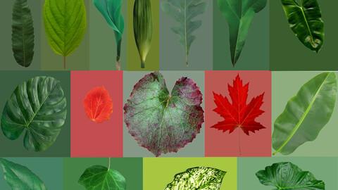 16 high quality leaves