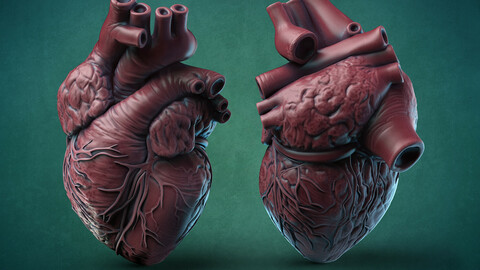 Humans Heart 3D print model