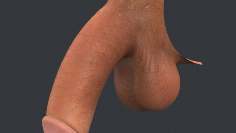 Realistic Male Penis