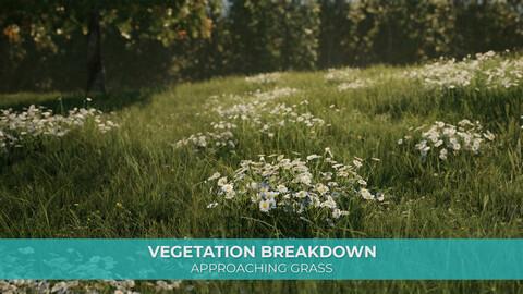 Vegetation Breakdown - Approaching Grass
