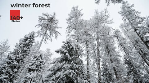 Winter Forest. Environment Refrence Pictures.