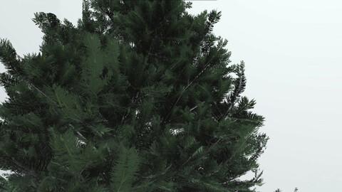tree spruce 3d model 3D model