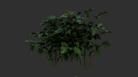 3 plant 3d models 3D model