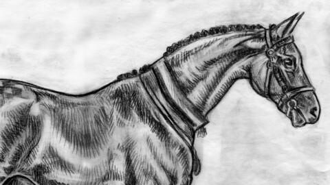 Intermediate Horse Anatomy Tutorial