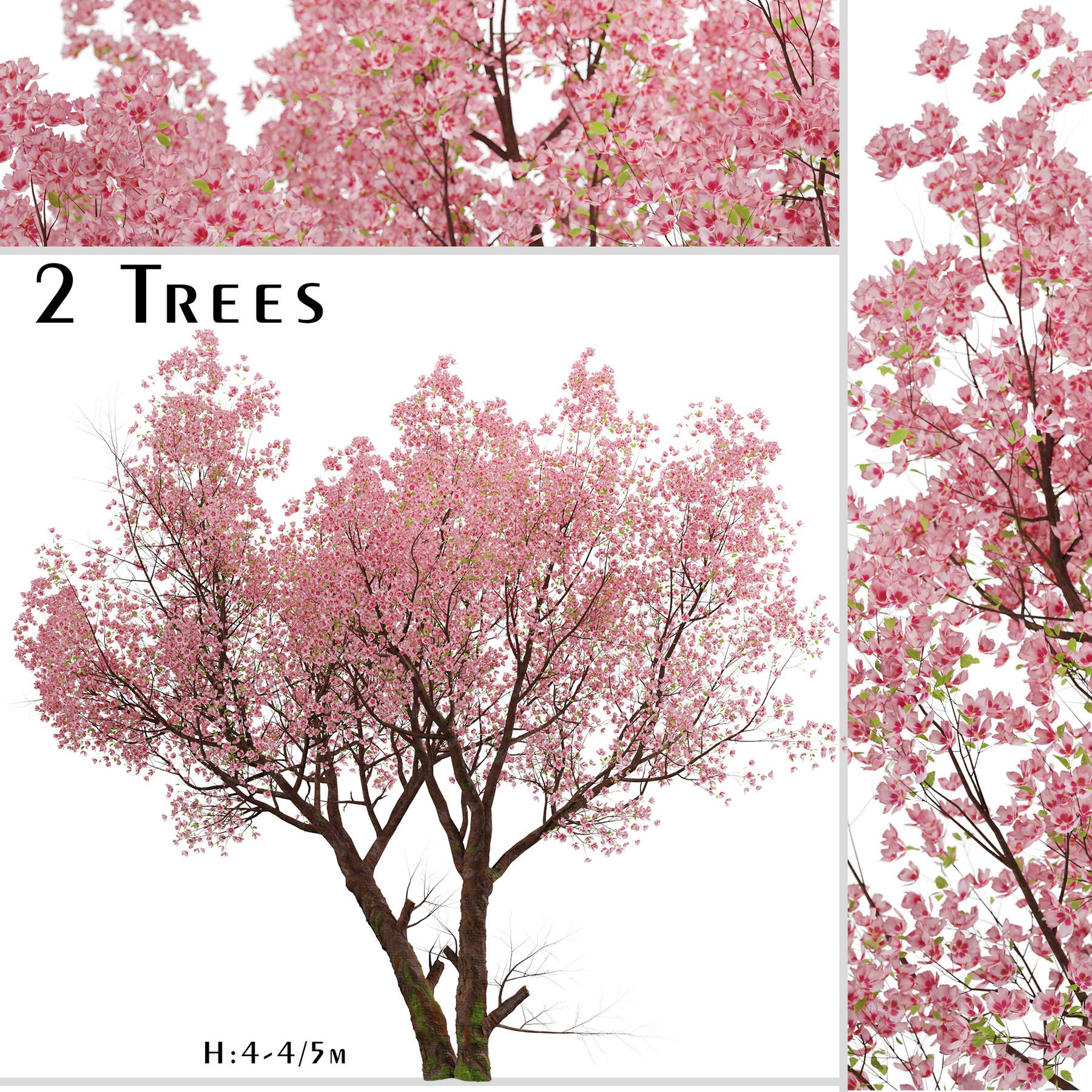 Artstation Sakura Tree Cherry Blossom Or Prunus Cerasus 2 Trees Resources