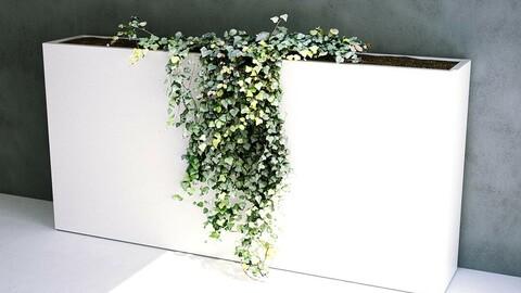 Trailing Ivy [3d Scan Model: Plants / Flowers]