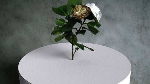 Camellia Japonica Twig 08 with White Flowers [3d Scan Model: Plants / Flowers]