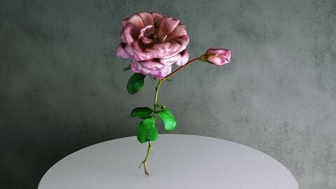 Rose / Rosa Hybrida 03 Pink [3d Scan Model: Plants / Flowers]
