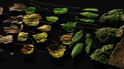 36 Foliage types | 32-16 bit 6K atlases | 325 textures