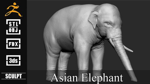 Asian Elephant Sculpt