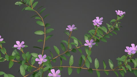 2021 PBR Lesser Perriwinkle Collection (Vinca Minor)