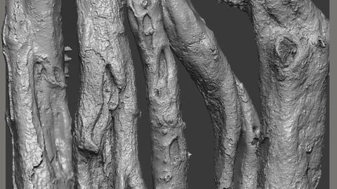 Z brush - Trunk Detail Brushes 2 Volume
