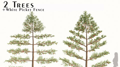 Set of Apple Trees (Malus domestica) and White Picket Fence (2 Trees)