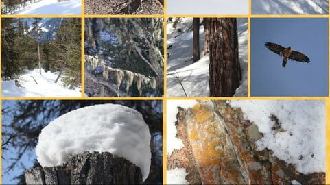 Snow Mountain Forest Ref Pack