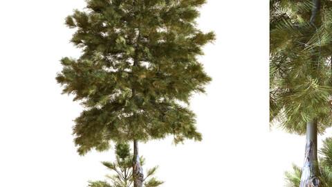 tree 035