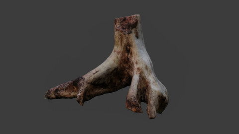 Photoscanned Tree Trunk