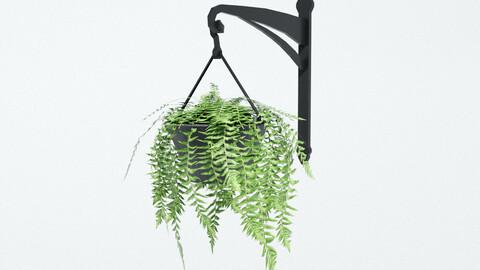 Fern in Hanging Pot