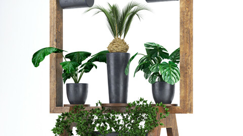 Wooden stand of plants collection