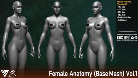 Female Anatomy (Base-Mesh) Vol 01