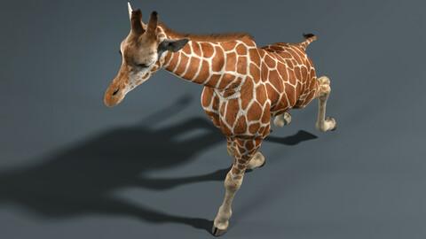 Giraffe Fur Animated