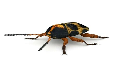 Ten-Spotted Pot Beetle