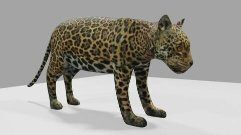 Jaguar - Ounce - Onca Pintada Low-poly 3D model