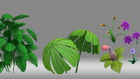 plant Tropical plants