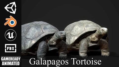 Galapagos Tortoise  - Game Ready
