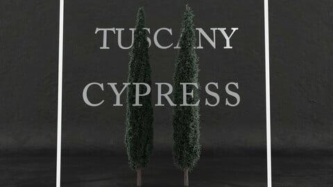 Tuscany cypress tree pack