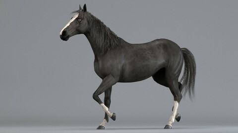 Horse Black Animated Arnold
