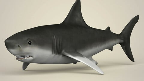 Realistic Shark 3D Model