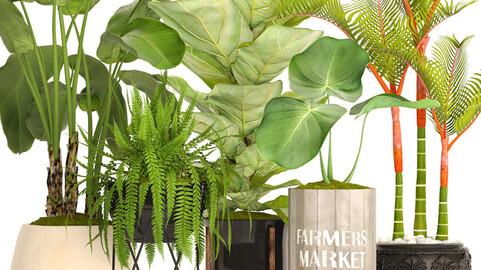 Plants 3d collection 1