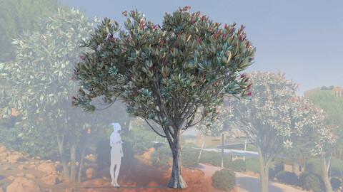 3d models of young bronze loquat tree eriobotrya deflexa