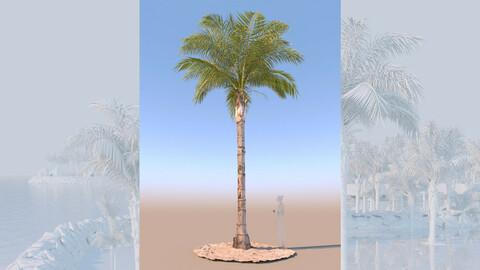 3D model of syagrus romanzoffiana queen palm mature c