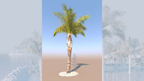 3D model of syagrus romanzoffiana queen palm mid b