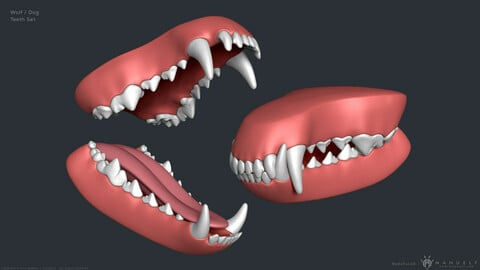 Wolf Dog Mouth and Teeth Set